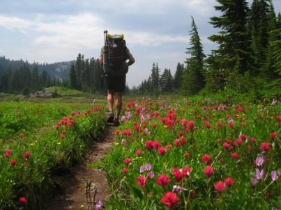 moose flowers